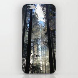 Sunlight Shines Through the Trees iPhone Skin