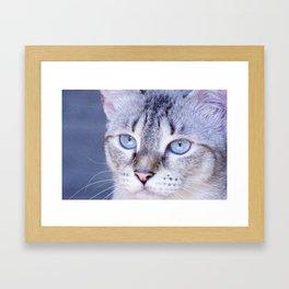 kitten blue yes Framed Art Print