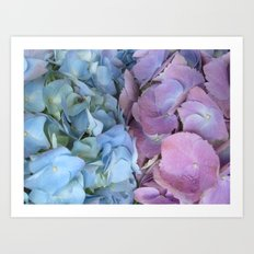 b&p flowers  Art Print