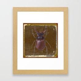 ANTIQUE STAG-HORNED BEETLE BROWN ART Framed Art Print