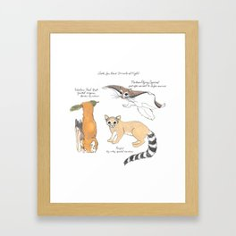 Look for These Animals at Night Framed Art Print