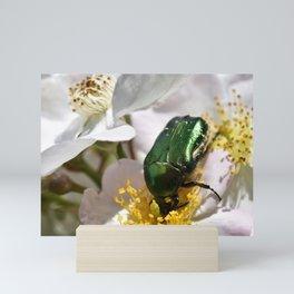 Rose Beetle Insect Mini Art Print