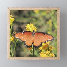 Queen Butterfly on Rubber Rabbitbrush in Claremont CA Framed Mini Art Print