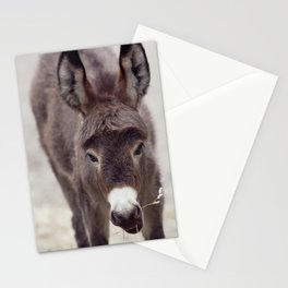 Young donkey mule eating, close up Stationery Cards