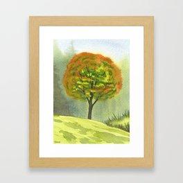 Briars, Fall Maple, Sept 29th Framed Art Print