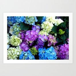 Colorful Flowering Bush Art Print
