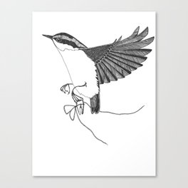 Nuthatch steals a tooth from the tooth fairy Canvas Print