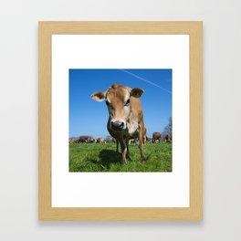 Jersey Moo  Framed Art Print