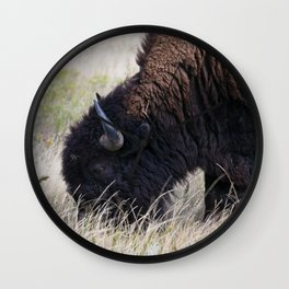 Peaceful Grazing Bison Wall Clock