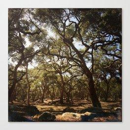For the Love of Trees. Santa Barbara, California Canvas Print