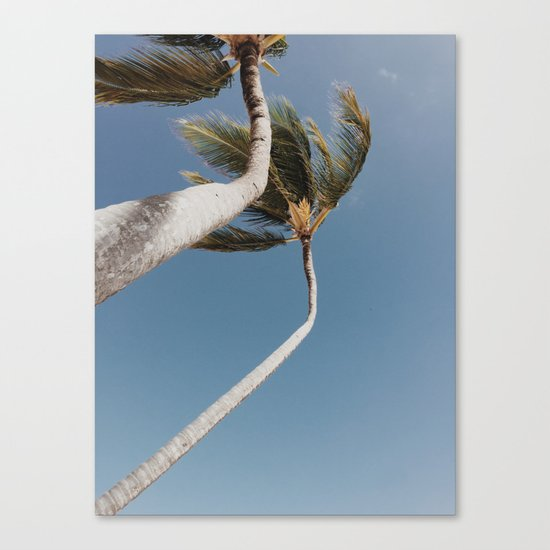 Crooked Palm Trees Canvas Print