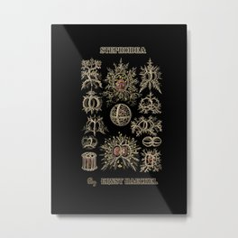 """Stephoidea"" from ""Art Forms of Nature"" by Ernst Haeckel Metal Print"
