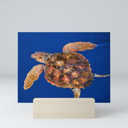 Loggerhead sea turtle Mini Art Print