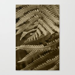Copper Penny Ferns Glisten Canvas Print