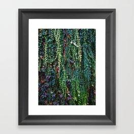Ivy Framed Art Print