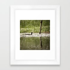 Aquatic wanderer Framed Art Print