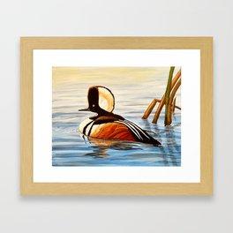 Hooded Merganser Duck Framed Art Print