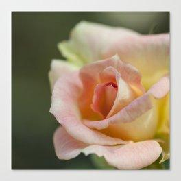 Flower Five Canvas Print