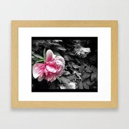 flower petunias Framed Art Print