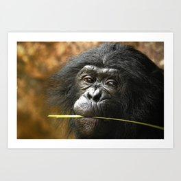Toby the young Bonobo Art Print
