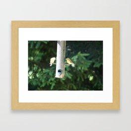 Mr. & Mrs. Goldfinch Framed Art Print