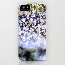 Purple Forum Cut Girl Scout Cookies Strain iPhone Case