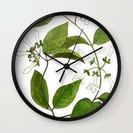 Stephanotis Vine Wall Clock