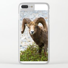 Ram Stare Down Clear iPhone Case