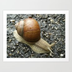 Snail Photography Art Print