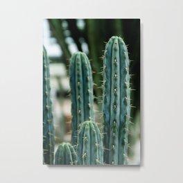 Cactus 04 Metal Print