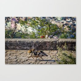 A Monkey Riding a Pig in India Canvas Print