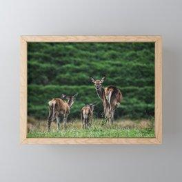 Fallow Deer Family Framed Mini Art Print