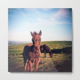 Dartmoor Pony Portrait (2) Metal Print