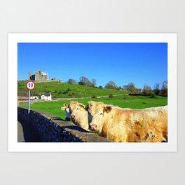 castle cows Art Print