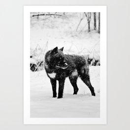 Snow Wolf II Art Print