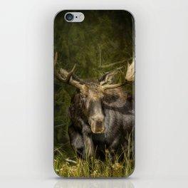 The Bull Moose iPhone Skin