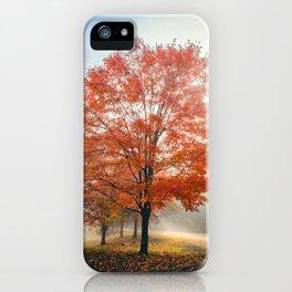 Fall Tree Beauty Photograph iPhone Case
