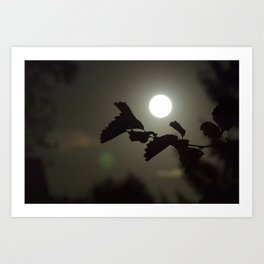By the light of the full moon Art Print