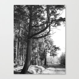 Parkhurst Forest - Newport - Isle of Wight #1 Canvas Print