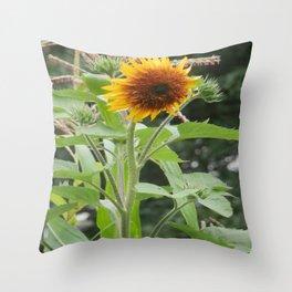 Single sunflower bloom Throw Pillow