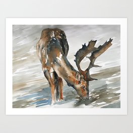 deer#2 Art Print
