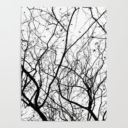 Branches Poster