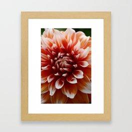 Cognac-Colored Dahlia Framed Art Print