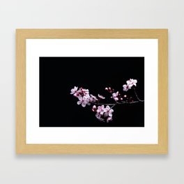 Flower Photography by David Brooke Martin Framed Art Print