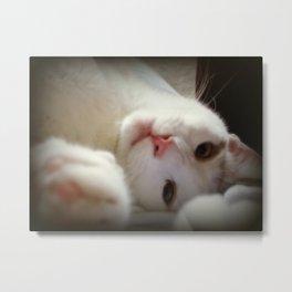 Coy Cat Metal Print