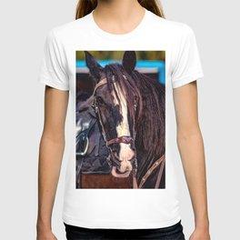 Concept Kaltblutmarkt 2018 : Horse eyes T-shirt