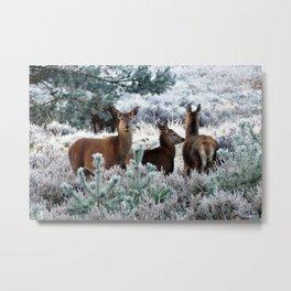 Deer Family In Winter Metal Print