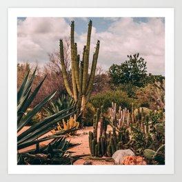 Cactus_0012 Art Print