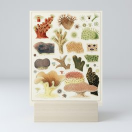 Great Barrier Reef Corals from The Great Barrier Reef of Australia (1893) by William Saville-Kent (1 Mini Art Print