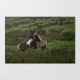 Wild Dartmoor Foals Canvas Print